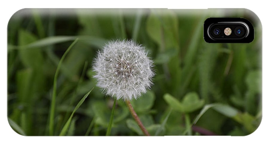 Abstract IPhone X Case featuring the photograph Dandelion at the end by Adrian Bud