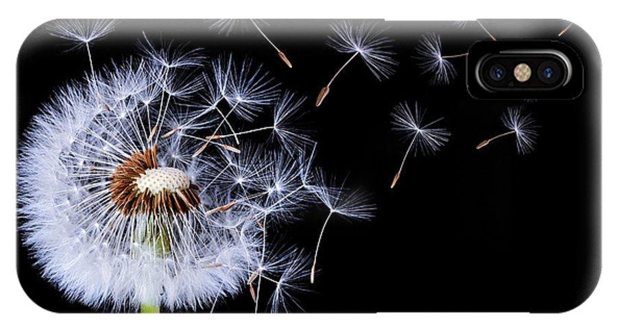 Dandelion Blowing On Black Background Iphone X Case
