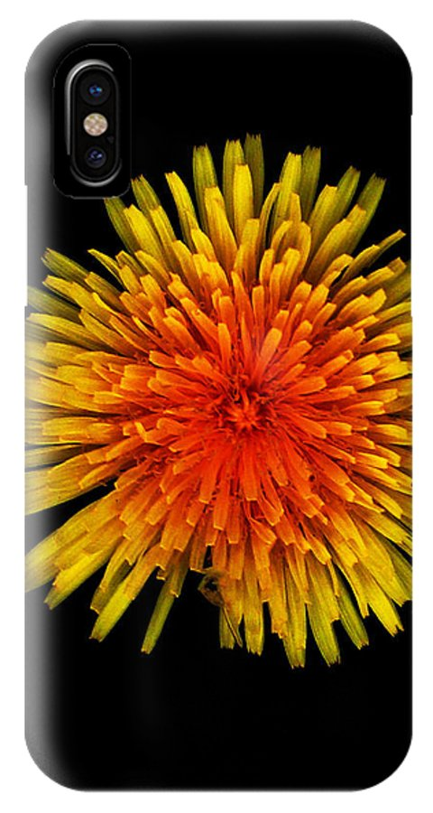 Dandelion IPhone X Case featuring the photograph Dandelion Contrast by Dylan Punke