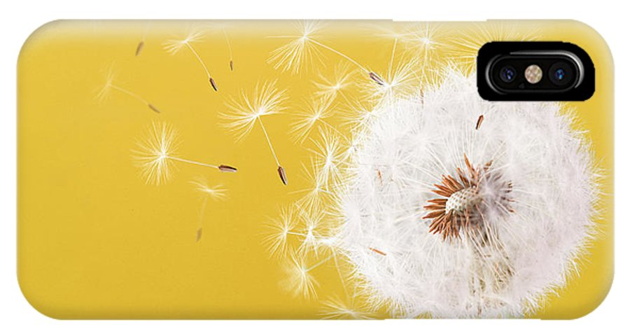 Dandelion Flying On Colorful Background Iphone X Case