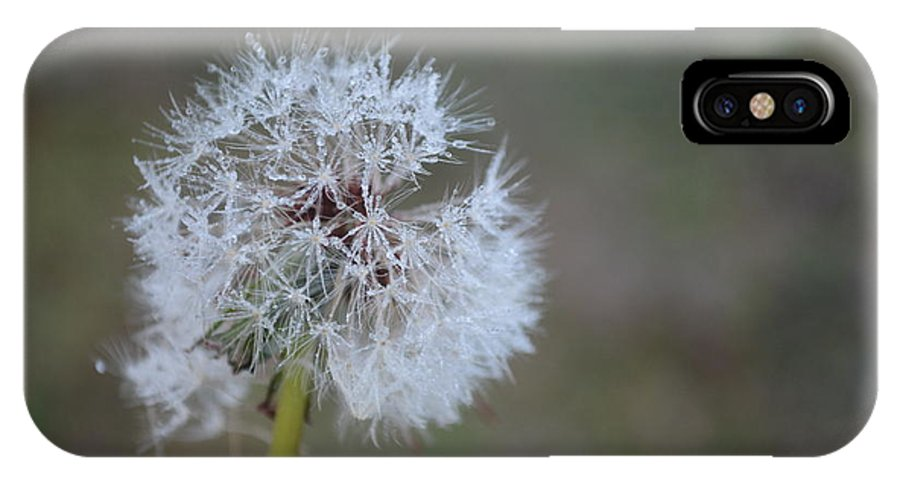 Dandelion Frost IPhone X Case featuring the photograph Dandelion Frost by Maria Urso