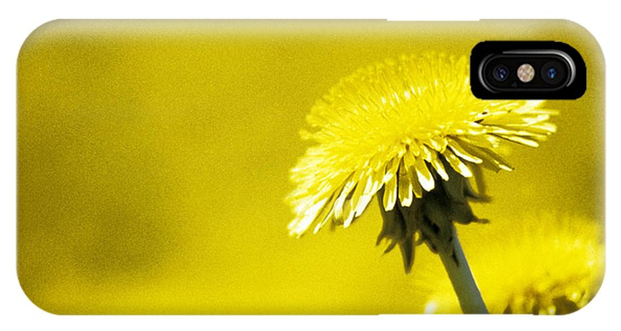 Dandelion IPhone X Case featuring the photograph Dandelion In Yellow by Steve Somerville