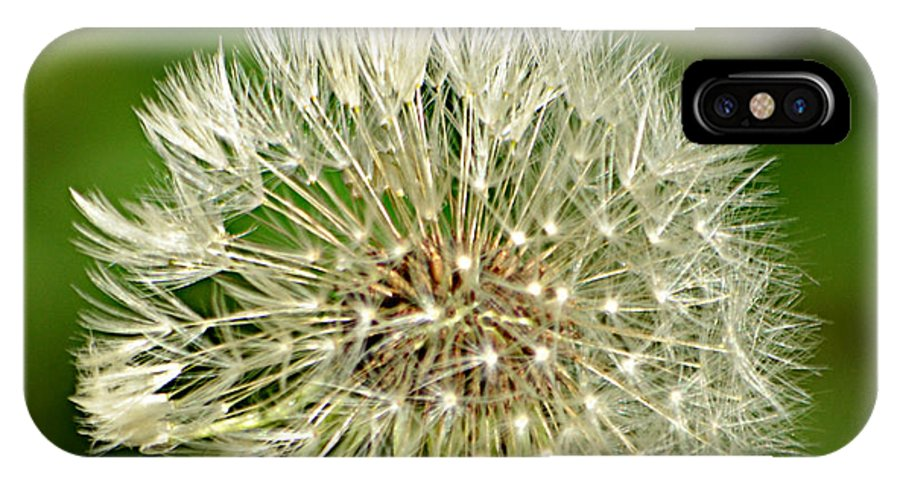 Dandelion Puff IPhone X Case featuring the photograph Dandelion Puff by Ally White
