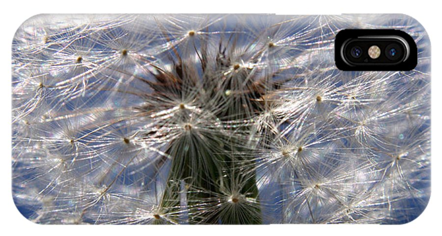 Dandelion IPhone X Case featuring the photograph Dandelion by Ralph A Ledergerber-Photography