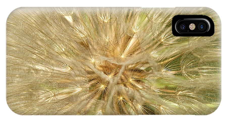 Dandelion IPhone X Case featuring the photograph Dandelion Seeds by Graham Elliott
