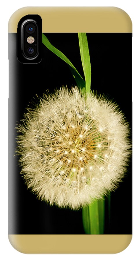 Floral IPhone X Case featuring the photograph Dandelion's Seed Head. by Elena Perelman