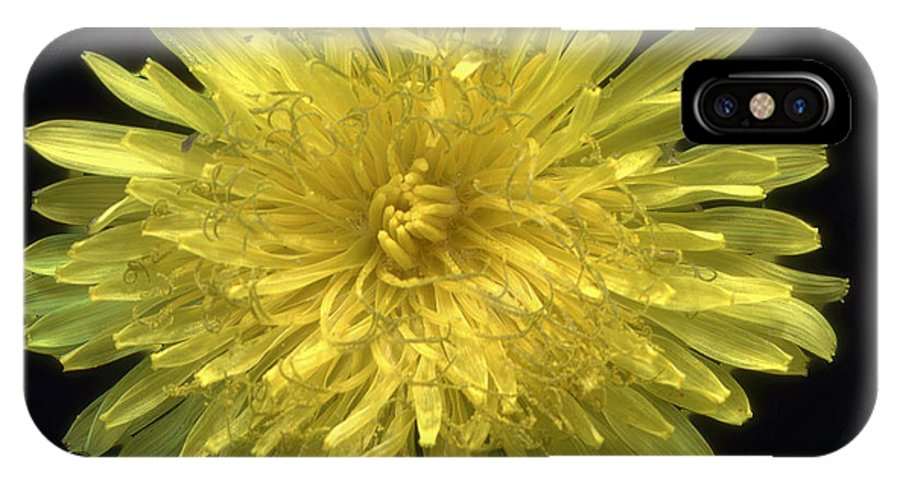 Flower IPhone X Case featuring the photograph Dandy Dandelion by Kat Saarloos