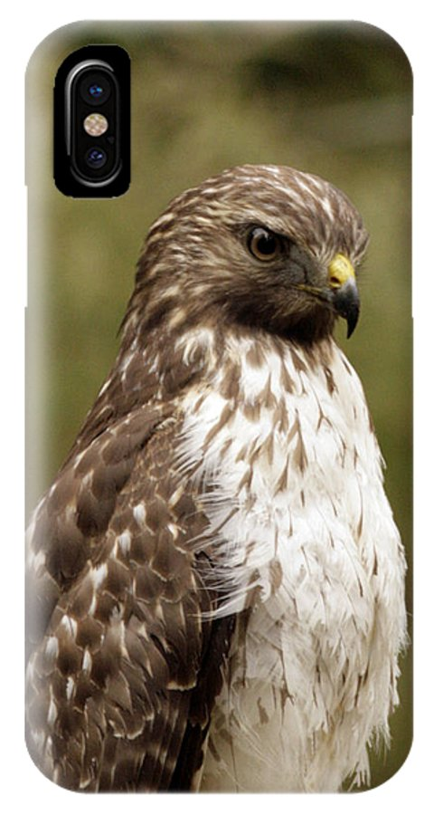 Bird IPhone X Case featuring the photograph Dark Beauty by Phill Doherty