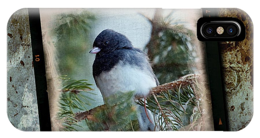 Bird IPhone Case featuring the photograph Dark-eyed Junco by Al Mueller