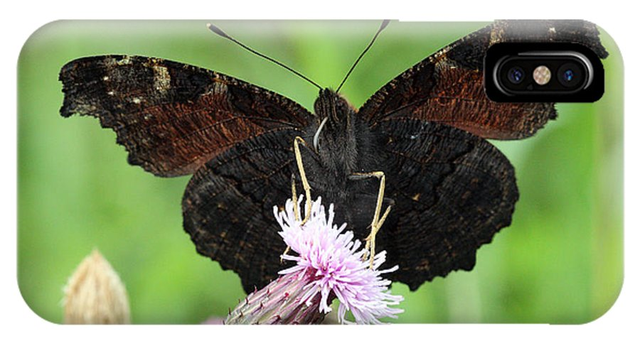 Butterfly IPhone X Case featuring the photograph Dark Knight Dark Side Of A Peacock Butterfly In Ireland by Pierre Leclerc Photography