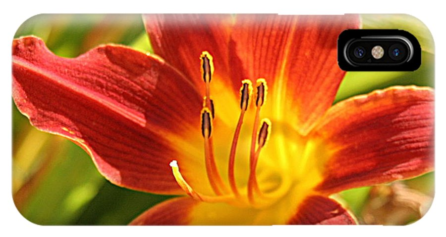 Flower IPhone X Case featuring the photograph Daylily by Jean Macaluso