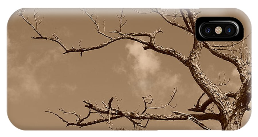 Sepia IPhone X Case featuring the photograph Dead Wood by Rob Hans