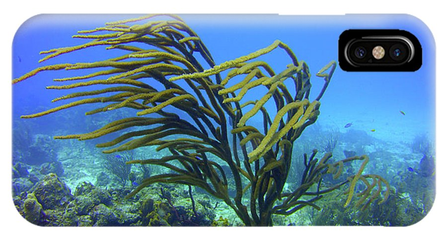 Deepwater IPhone X / XS Case featuring the photograph Deepwater Gorgonia Just Flowing In The Wind by Bob Foudriat