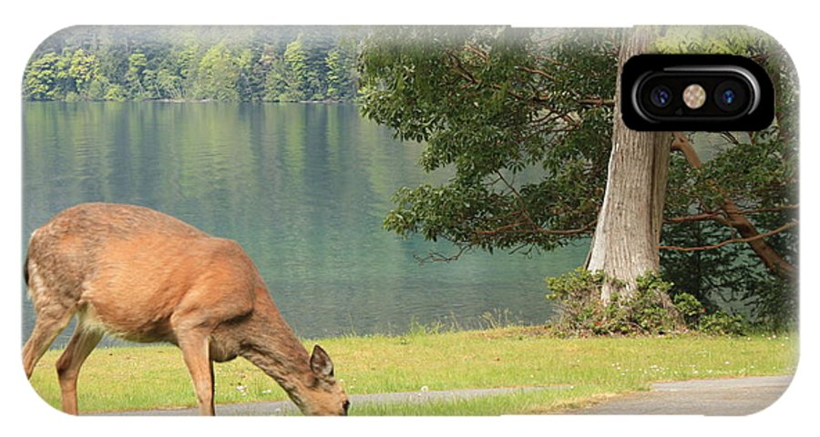 Crescent Lake IPhone X Case featuring the photograph Deer By Crescent Lake by Carol Groenen