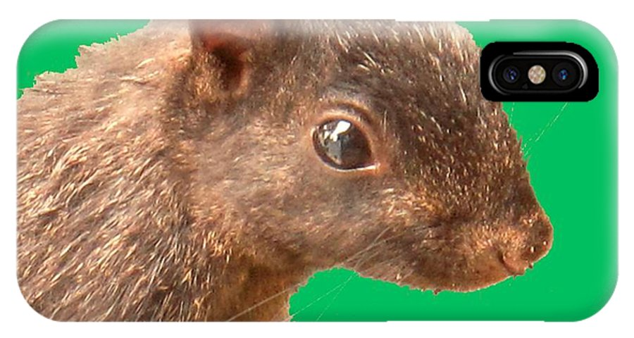 Squirrel IPhone X Case featuring the photograph Definately Bright Eyed by Ian MacDonald