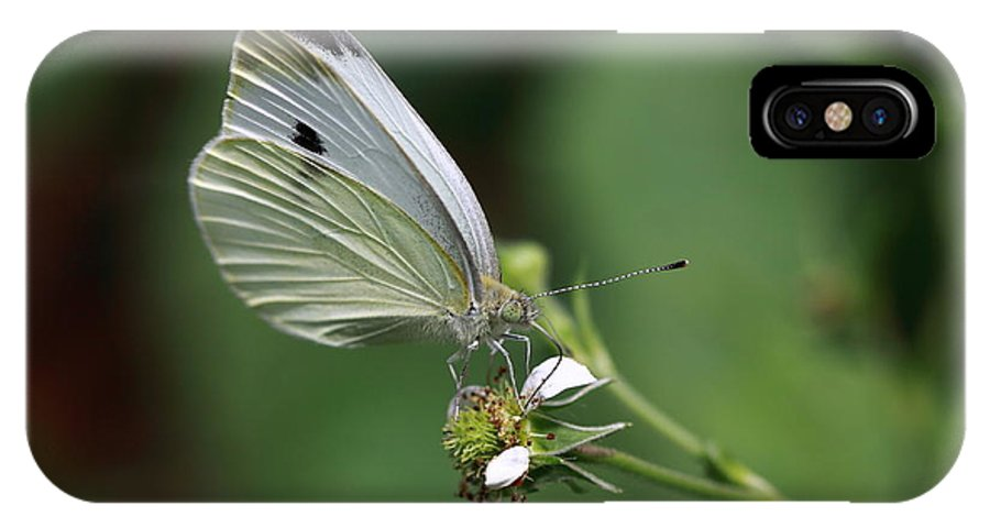 Butterfly IPhone X Case featuring the photograph Delicate Dance by Paul Slebodnick