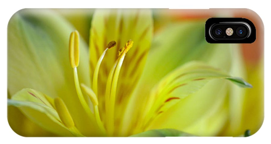 Yellow Alstroemeria IPhone X Case featuring the photograph Delicate Darling by Deb Halloran