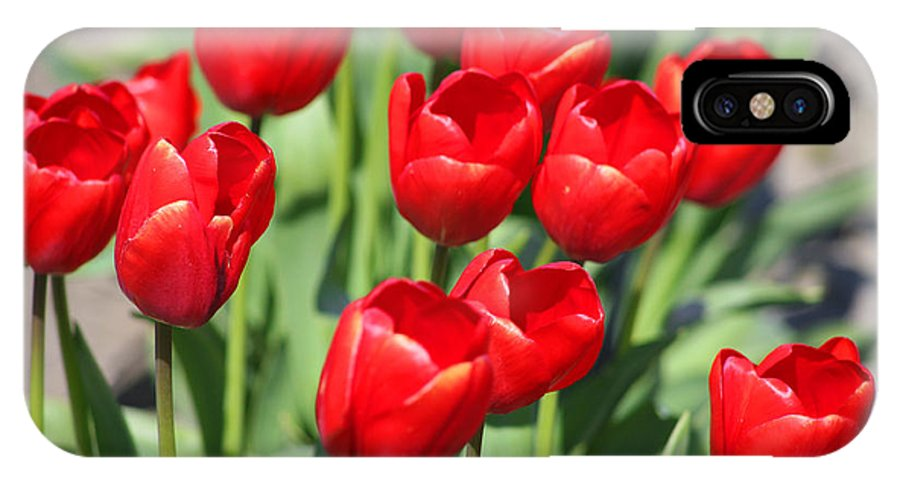 Red Tulips IPhone Case featuring the photograph Delicious Tulips by Mary Gaines