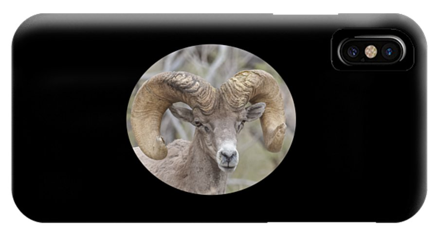 Nature IPhone X / XS Case featuring the photograph Desert Bighorn Ram Closeup by John Kulberg