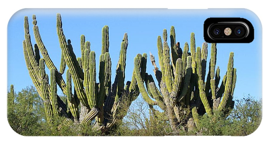 Desert IPhone X Case featuring the photograph Desert Cacti In Cabo Pulmo Mexico by Charlene Cox