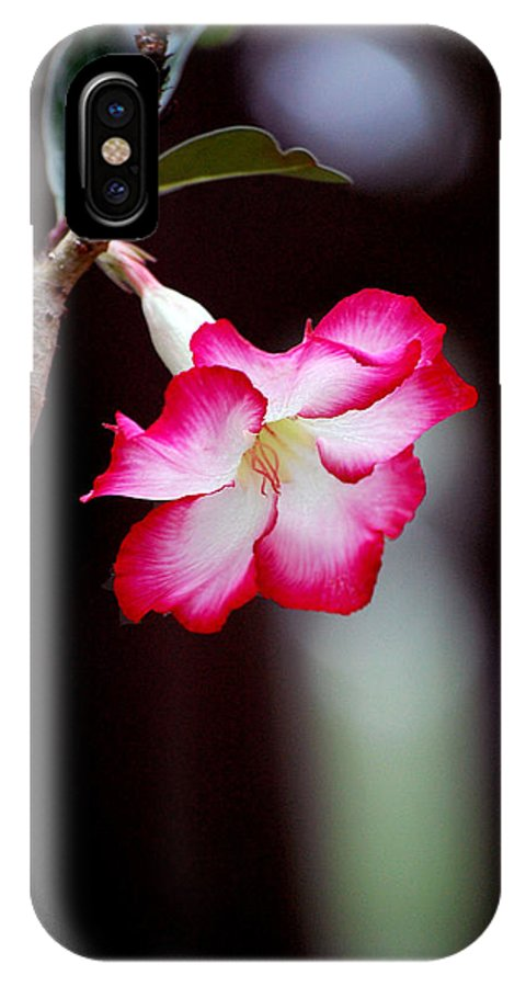 Flower IPhone X Case featuring the photograph Desert Flower by Robert Meanor