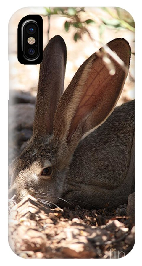 Desert IPhone X Case featuring the photograph Desert Jackrabbit by Carol Groenen
