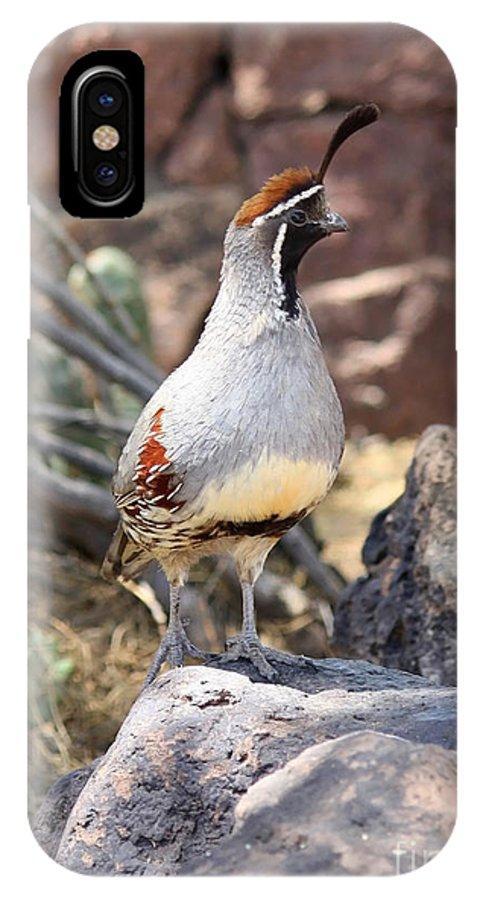 Bird IPhone X Case featuring the photograph Desert Quail by Carol Groenen
