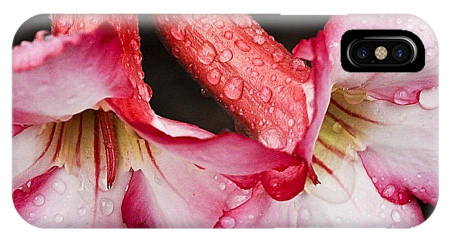Desert Rose IPhone X Case featuring the photograph Desert Rose by Edelberto Cabrera