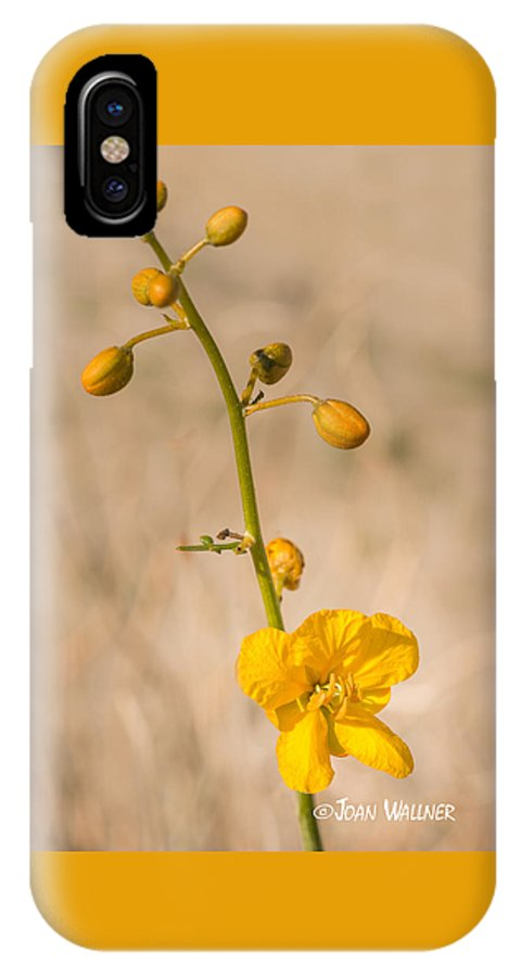 California IPhone X Case featuring the photograph Desert Senna In Spring by Joan Wallner