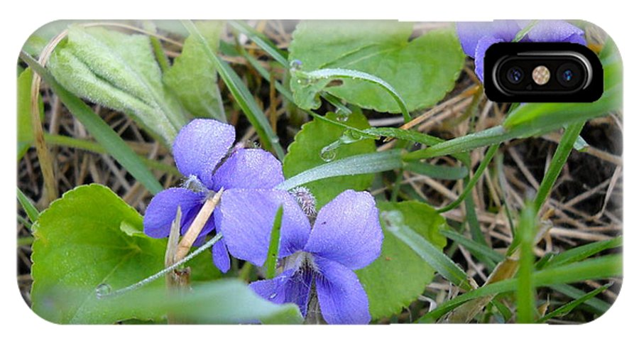 Violets IPhone X Case featuring the photograph Dew Covered Wild Violets by Kent Lorentzen