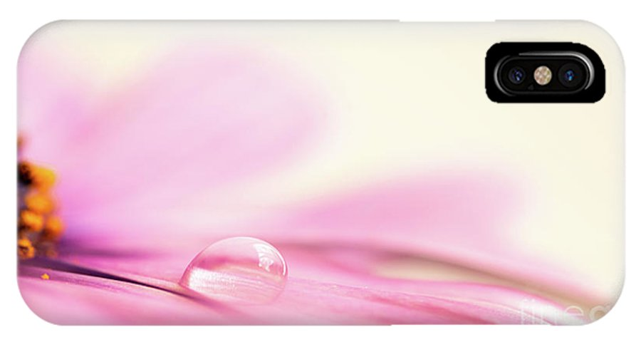 Daisy IPhone X Case featuring the photograph Dew On A Daisy by Delphimages Photo Creations