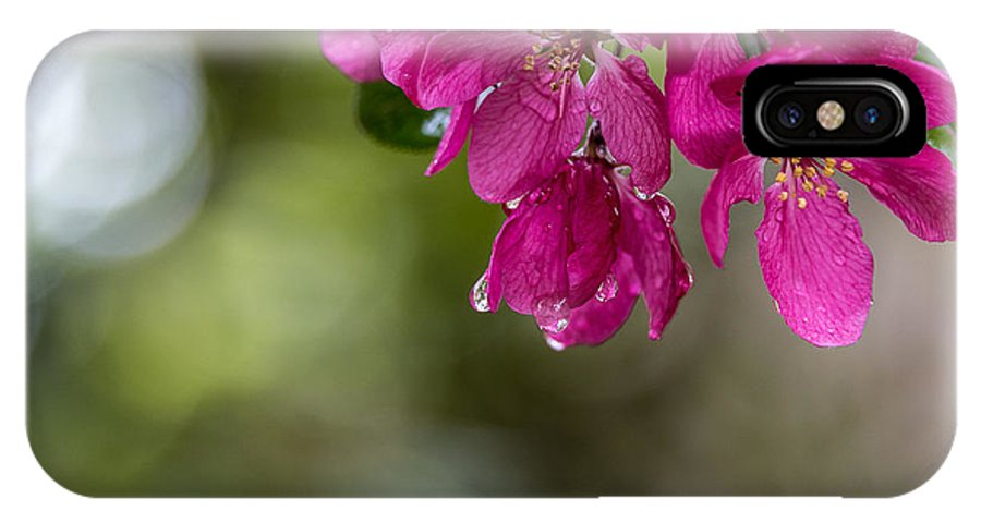 Flowers IPhone X Case featuring the photograph Dew On Blossoms by Beverly Tabet