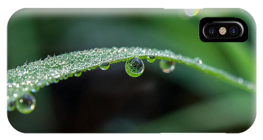 Dew On Grass Blade IPhone X Case featuring the photograph Dew On Grass Blade by Keith Frost