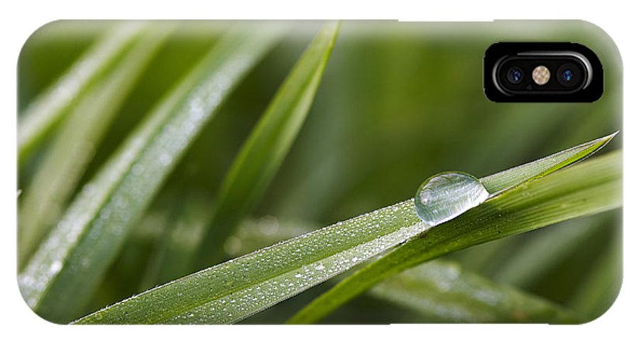 Grass IPhone X Case featuring the photograph Dewy Drop On The Grass by Michal Boubin