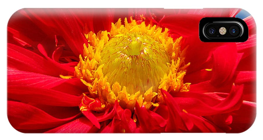 Dhalia IPhone Case featuring the photograph Dhalia by Amanda Barcon