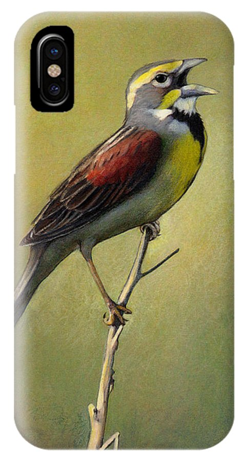 Birds IPhone X / XS Case featuring the drawing Dickcissel Summer Song by Bruce Morrison