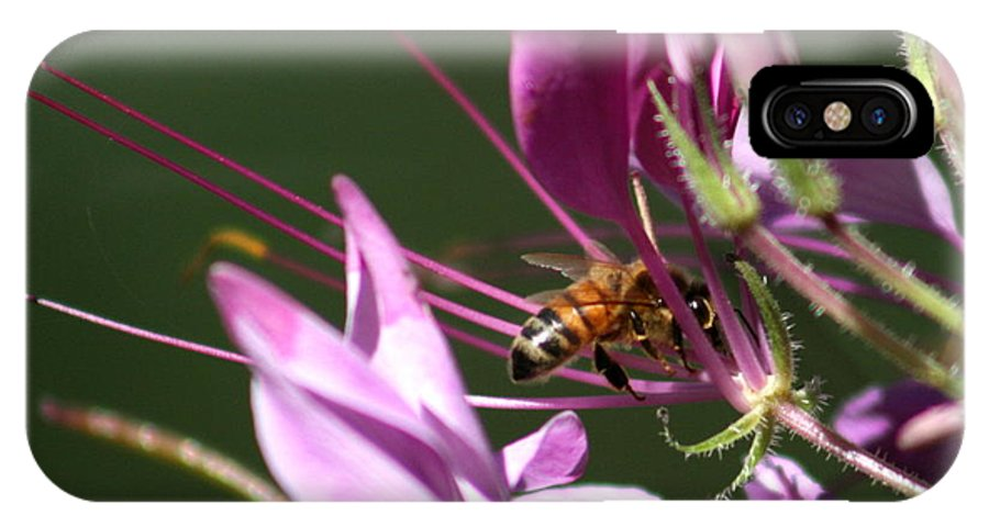 Bug IPhone Case featuring the photograph Digging In The Stamens by David Dunham