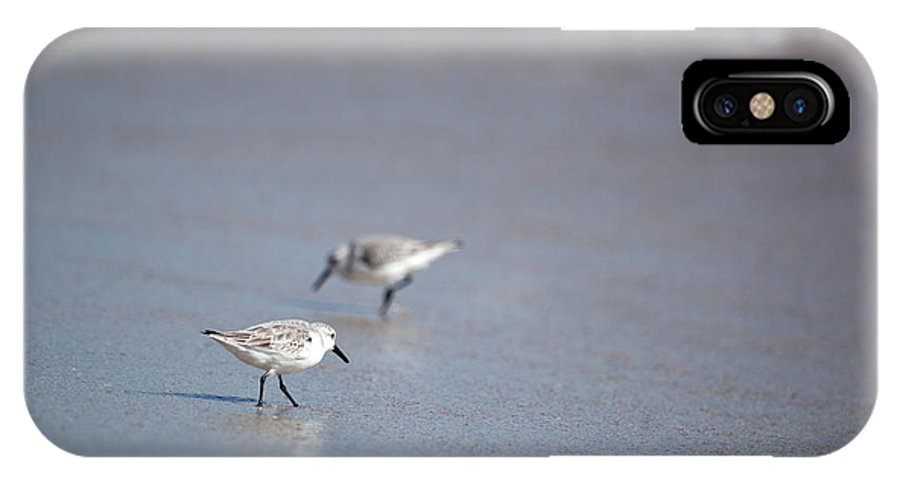 Sandpipers IPhone X Case featuring the photograph Dinner Time Sandpipers Feeding Delray Beach Florida by Michelle Constantine
