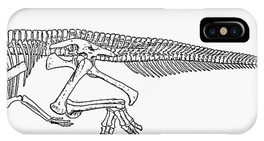 Corythosaurus IPhone X Case featuring the photograph Dinosaur: Corythosaurus by Granger