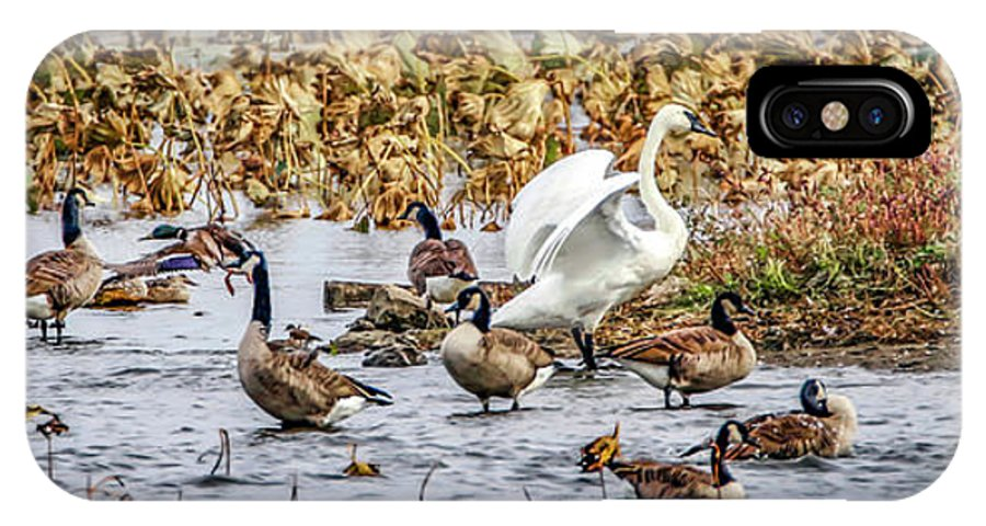 Waterfowl IPhone X Case featuring the photograph Diversity by Ray Congrove