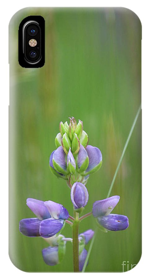 Flowers IPhone X / XS Case featuring the photograph Divine Lupine by Tania Morris