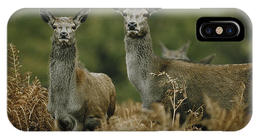 Deer IPhone X Case featuring the photograph Doe And Young Deer by Steve Somerville
