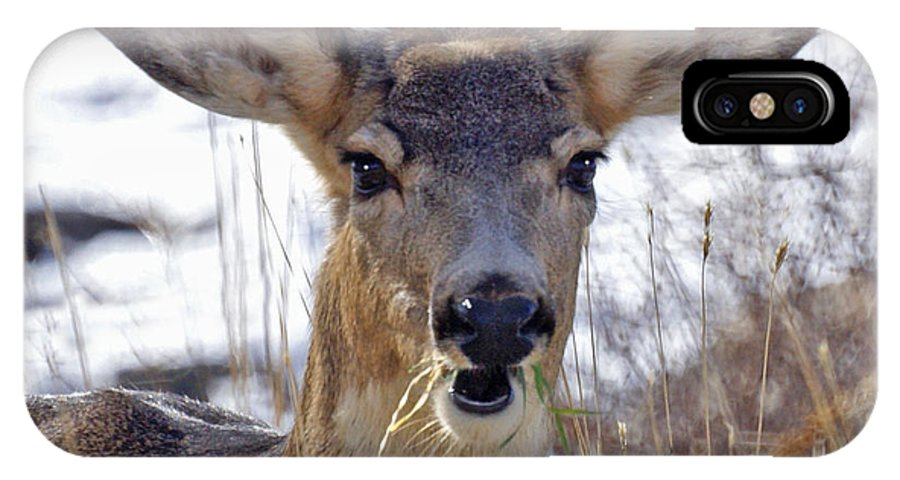 Doe IPhone X Case featuring the photograph Doe by Heather Coen
