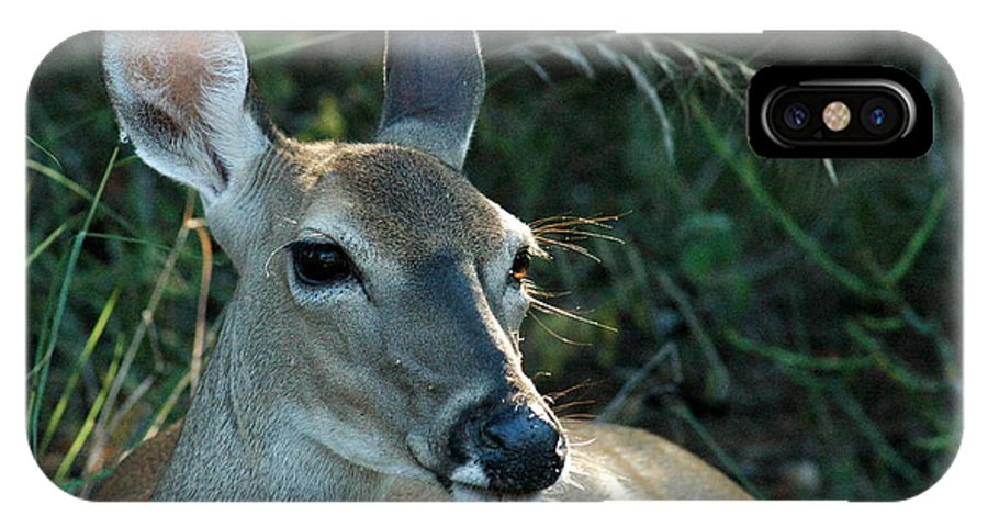 Deer IPhone X Case featuring the photograph Doe Watching by Teresa Blanton