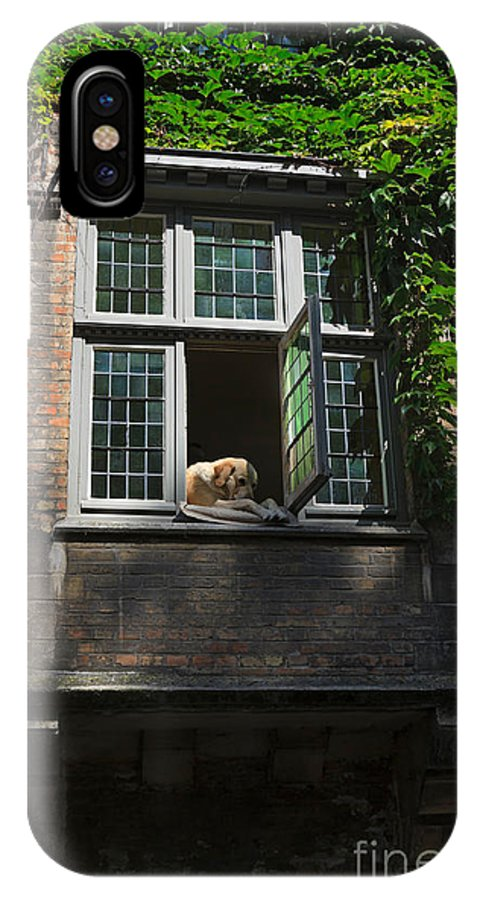 Dog IPhone X Case featuring the photograph Dog In A Window Above The Canal In Bruges Belgium by Louise Heusinkveld