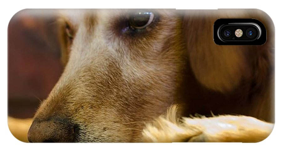 Dog IPhone X Case featuring the photograph Dog In Thought by Porter Slice