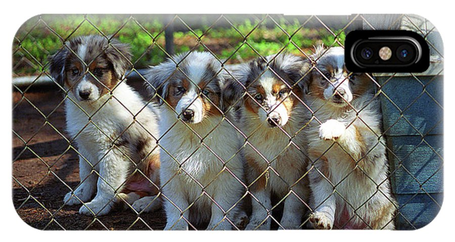 Animals IPhone X Case featuring the photograph Dogs. Let Us Out #2 by Frank Romeo