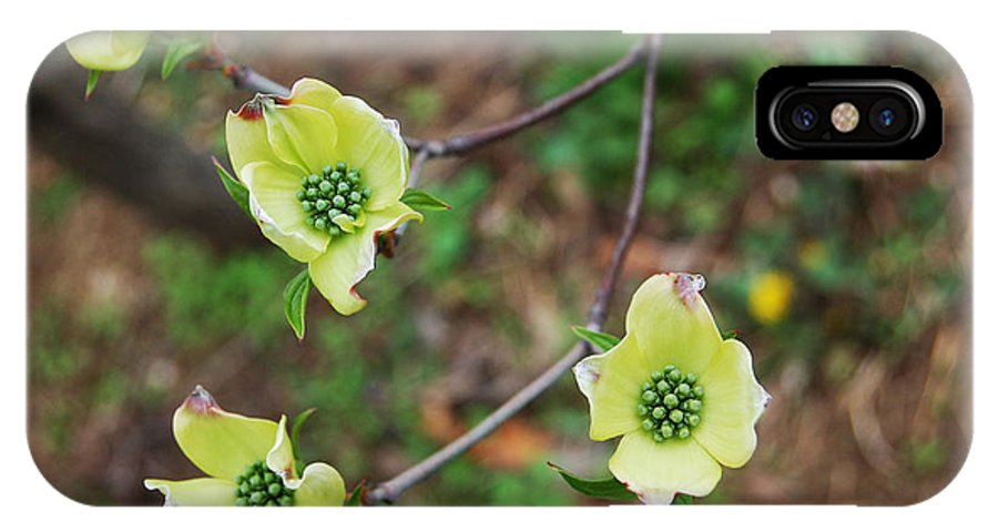 Dogwood IPhone X Case featuring the photograph Dogwood Flowers by Julie VanDore