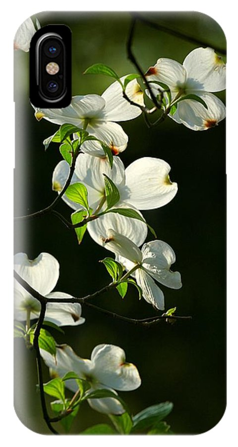 Dogwood Flowers IPhone X Case featuring the photograph Dogwood Retrospective by Michael Dougherty