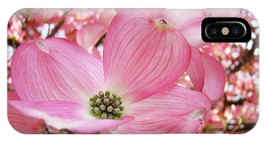 Dogwood IPhone X Case featuring the photograph Dogwood Tree 1 Pink Dogwood Flowers Artwork Art Prints Canvas Framed Cards by Baslee Troutman